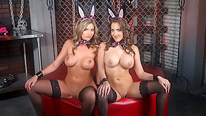 The Taming of the Bunnies